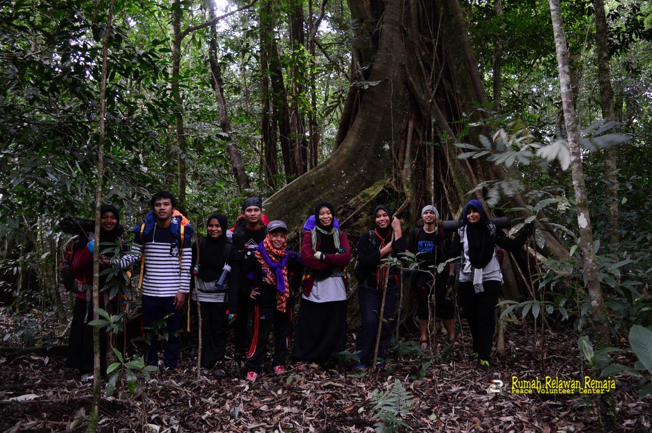Pohon beringin di jalur pendakian Gunung Seulawah Agam